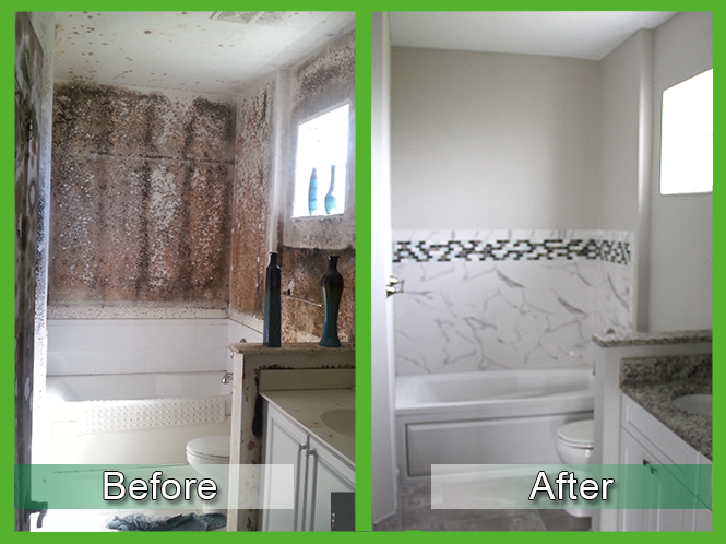 Mold Removal Before and After 2