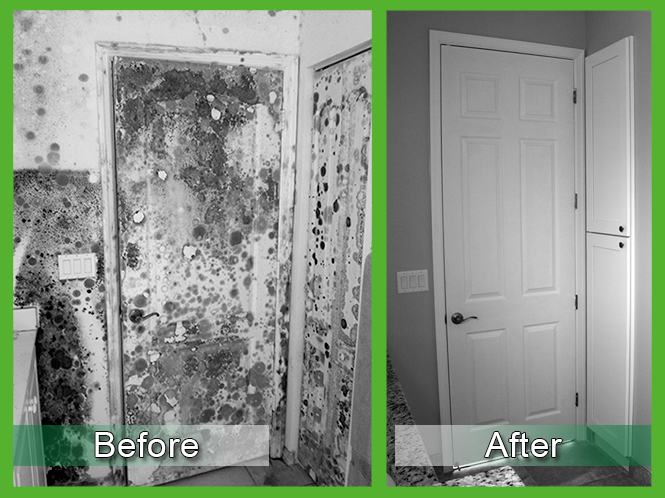 Mold Removal Before and After 1