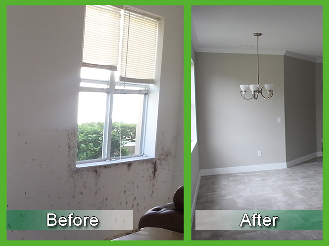 Mold Removal Before and After 5